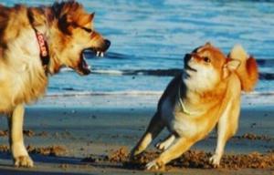 狗狗洁足泡沫
