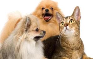 宠物驱散喷剂